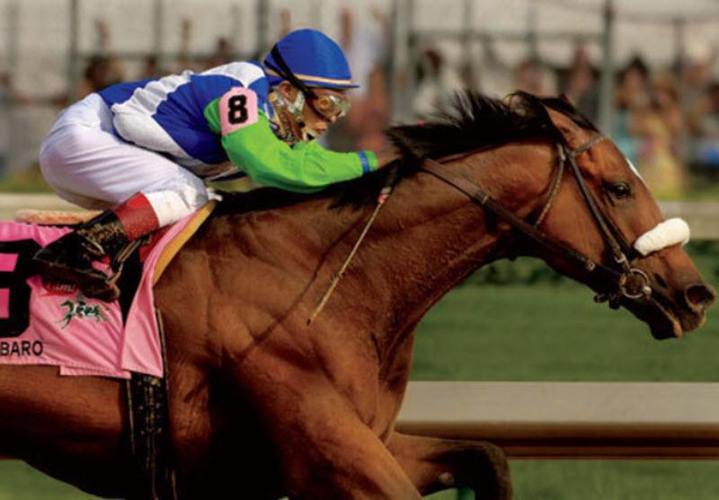 Barbaro (horse)